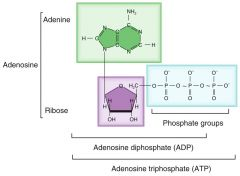 Three phosphate groups attached to an adenosine group; the principal energy-storing molecule in the body