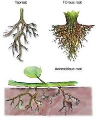 3 kinds of roots