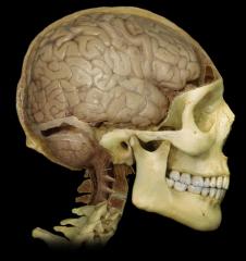 Precentral Gyrus