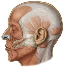 insertion: depressor anguli oris