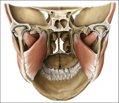 insertion: medial pterygoid