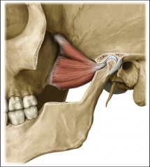 insertion: lateral pterygoid