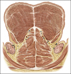 insertion: hyoglossus