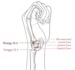 On the ulnar border of the hand, in the depression between the base of the fifth metacarpal bone and the triquetral bone.