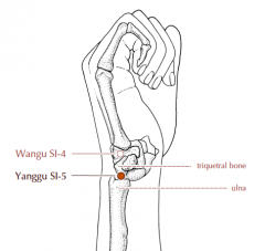At the ulnar border of the wrist, in the depression between the head of the ulna and the triquetral bone.