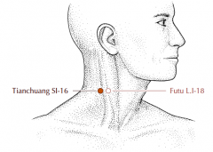 On the posterior border of the sternocleidomastoid muscle, level with the laryngeal prominence.