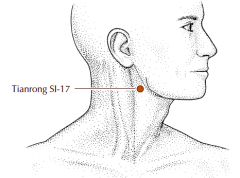 In the depression between the angle of the mandible and the anterior border of the sternocleidomastoid muscle.