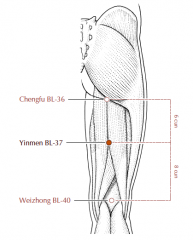 On the back of the thigh, in the depression between the hamstring muscles, 6 cun distal to BL-36, and 8 cun proximal to BL-40, on the line connecting BL-36 and BL-40.