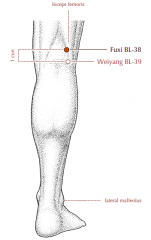On the back of the knee, 1 cun superior to BL-39, on the medial side of the tendon of biceps femoris.