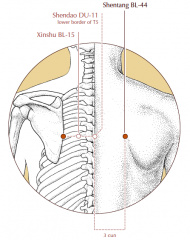 3 cun lateral to the midline, level with the lower border of the spinous process of T5 and level with BL-15.