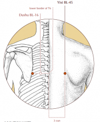 3 cun lateral to the midline, level with the lower border of the spinous process of T6 and level with BL-16.