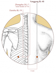 3 cun lateral to the midline, level with the lower border of the spinous process of T10 and level with BL-19.