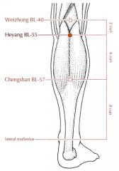 On the lower leg, 2 cun inferior to BL-40, on the line connecting BL-40 and BL-57, in the depression between the two heads of the gastrocnemius muscle.