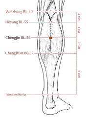 On the lower leg, 5 cun below BL-40 and midway between BL-55 and BL-57, in the center of the belly of the gastrocnemius muscle.