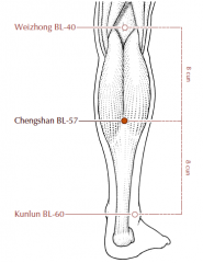 On the lower leg, in the depression formed below the bellies of the gastrocnemius muscle when the muscle is flexed, approximately 8 cun distal to BL-40, i.e. midway between BL-40 and BL-60.