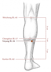 On the lower leg, 7 cun directly superior to BL-60, lateral to and approximately 1 cun inferior to BL-57.
