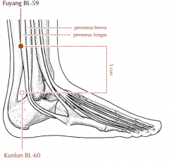On the lower leg, 3 cun directly superior to BL-60.
