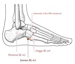 On the lateral side of the foot, in the depression posterior to the tuberosity of the fifth metatarsal bone.