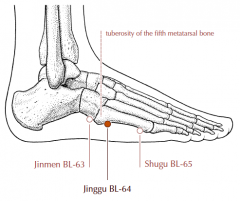 On the lateral side of the foot, in the depression anterior and inferior to the tuberosity of the fifth metatarsal bone.