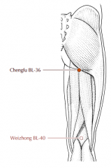 Just below the buttock, on a line directly superior to BL-40, in the center of the transverse gluteal crease in a depression between the hamstring muscles.