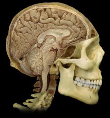 Pareto-Occipital Sulcus