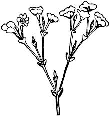 (Botany) a flower cluster