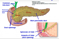 General anatomy of the pancreas....