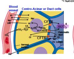 How does the Pancreas secrete HCO3-?   (sorry for the length)
