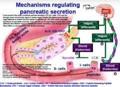 Mechanisms regulating pancreatic secretions... (steps)