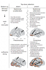 Dehaene modified it from conscious vs. multiple unconscious competition to... Subliminal (unattended)- not enough activity to trigger Subliminal (attended) - feed forward activation Preconscious - enough activation but top down attention prev...