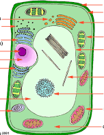Label the plant cell.