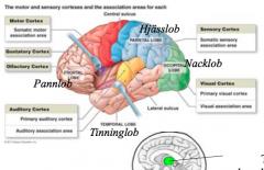 Postkontor! Omkopplingscentra för inkommande signaler, rätt signal till rätt del av hjärnan.