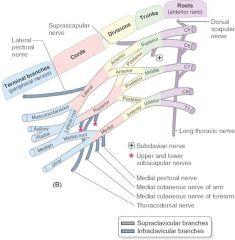 -STARS -subscapular (upper) nerve -thoracodorsal nerve -axillary nerve -radial nerve -subscapular (lower) nerve