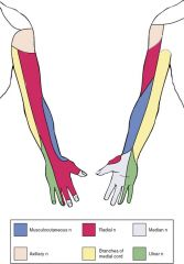 medial cord (side branch) and ends at wrist