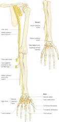 NERVE: -C7-T1 MUSCLES: -flexor carpi ulnaris -flexor digitorum profundus (1/2) -hypothenar muscles (abductor digiti minimi, opponens digiti minimi, flexor digiti minimi) -adductor pollicis -lumbricals (ring & pinky) -all interossei