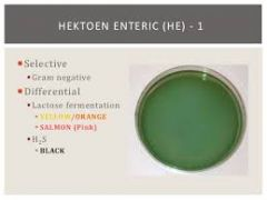 differential for lactose fermentation and hydrogen sulfide production  Selective for mainly salmonella, shigella; E. coli can also grow on it.    + Lactose fermen=yellow to salmon-pink colonies. fermentation of lactose sugar produces acidic by pro...