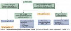 ・pathophysiologische Prinzipien   - gestörte Hb-Synthese bei gleichbleibender Eryzahl      ・Erkrankungen   - Thalassämie (↓Ferritin,↑Transferrin   - Eisenmagelanämie (↑Eisen, ↑Retikulozyten)