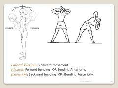 Lateral Flexion