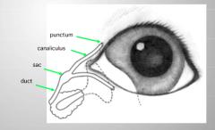 1. lacrimal puncta (2) 2. lacrimal canaliculi (2) 3. lacrimal sac (1) 4. nasolacrimal duct (1)