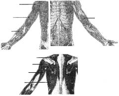 lower image, 3rd arrow