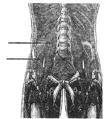 lower arrow