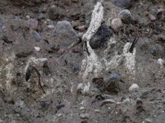 Comment se forment les concrétions racinaires (quatre remarques) ? Quelle est l'avantage des dépôts calcaires ?