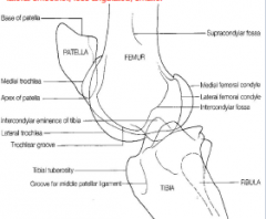 lateral view  condyles superimposed over each other femoral condyle over intercondylar emminence medial trochlear ridge - bigger more angular lateral - smoother, less angulated, smaller  -evaluate soft tissue for effusion and ligaments