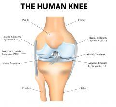 (small tendon below patella)