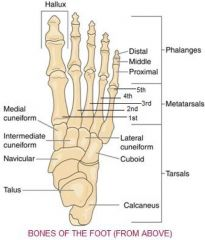 Medial cuneiform is close to 1st metatarsal   Intermediate cuneiform is close to 2nd metatarsal   Lateral Cuneiform is close to 3rd metartarsal