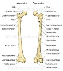 Lateral of the head,  - most noticeably the other bump on the femur
