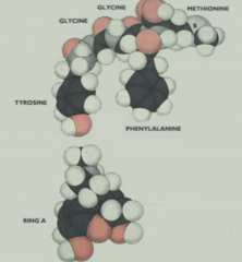 Resembles morphine in space filling model Explains why humans have receptor for plant compounds