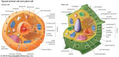 Similarities & differences of plant and animal cells