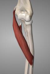 o: humero-ulnar head~ coronoid & medial epicondyle (via common flexor tendon) i: medial lateral radius a: pronates & flexes forearm at elbow