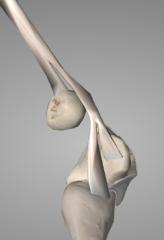 o: humeral head~    medial epicondyle (via common flexor tendon) i: pisiform carpal, hamate carpal, 5th metacarpal joint a: adducts & flexes hand at wrist
